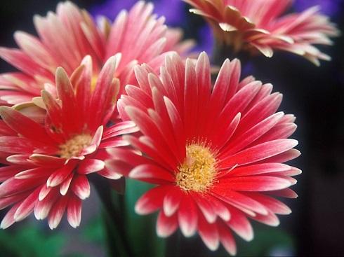 Flower1-006.jpg