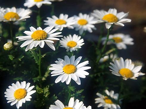 Flower1-010.jpg