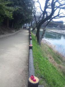 20110407sakura7