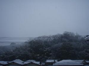 20110214雪1