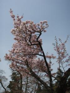 20110503_04大山17