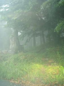 20110705金峰山4