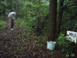 20110705野間岳2
