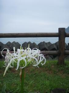 20110705鹿児島2