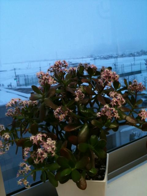 金の成る木と雪景色