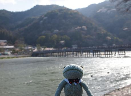 カエル君京都嵐山に出没