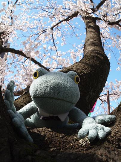 芦城公園桜 カエル君立つ
