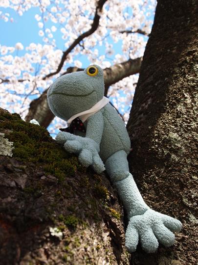 芦城公園桜 カエル君の冒険