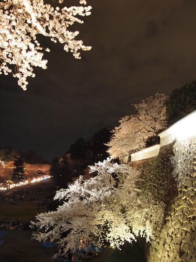 兼六園 石垣と夜桜