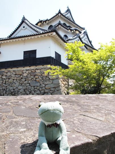 カエル君彦根城に出没