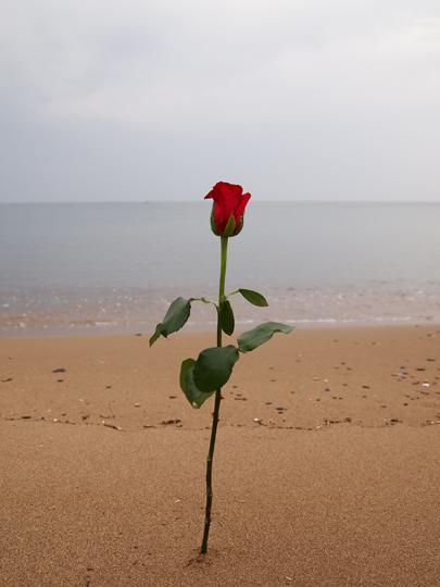 バラと砂浜