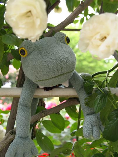 金沢総合運動公園のバラ園。カエル君バラ園に登場