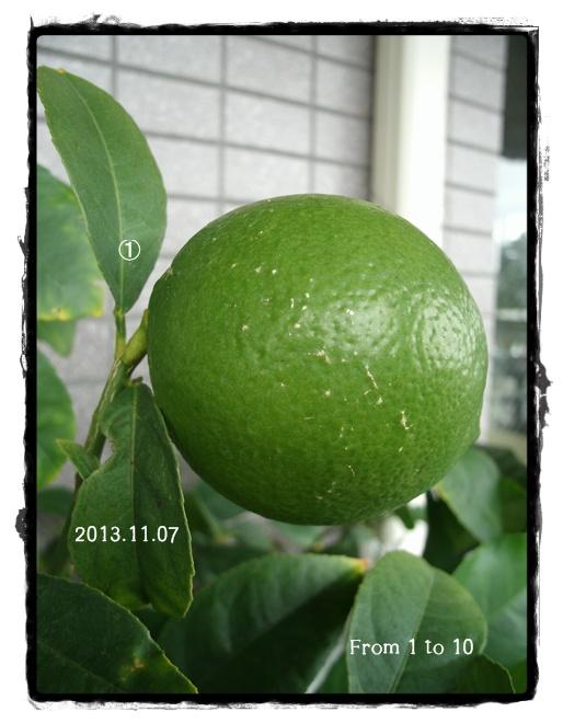 レモン果実2013年11月