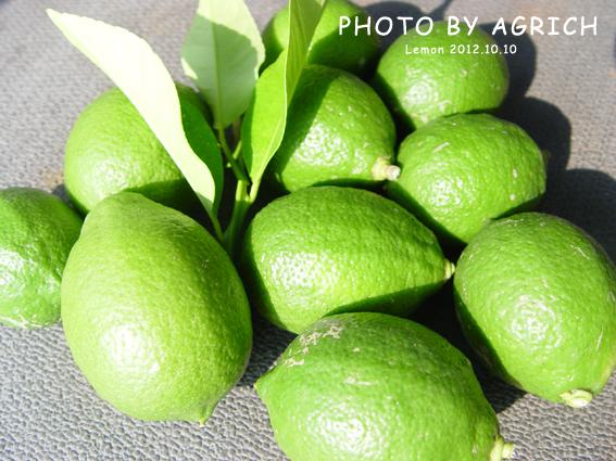 lemon 2012.10