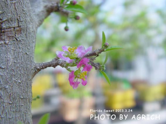 flower 2013.3.24
