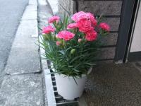 2011_050705・5 プレゼント0001
