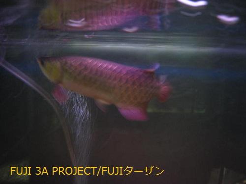 004_20130328173606.jpg