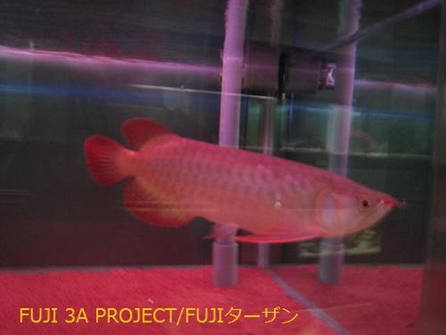 006_20130427124100.jpg