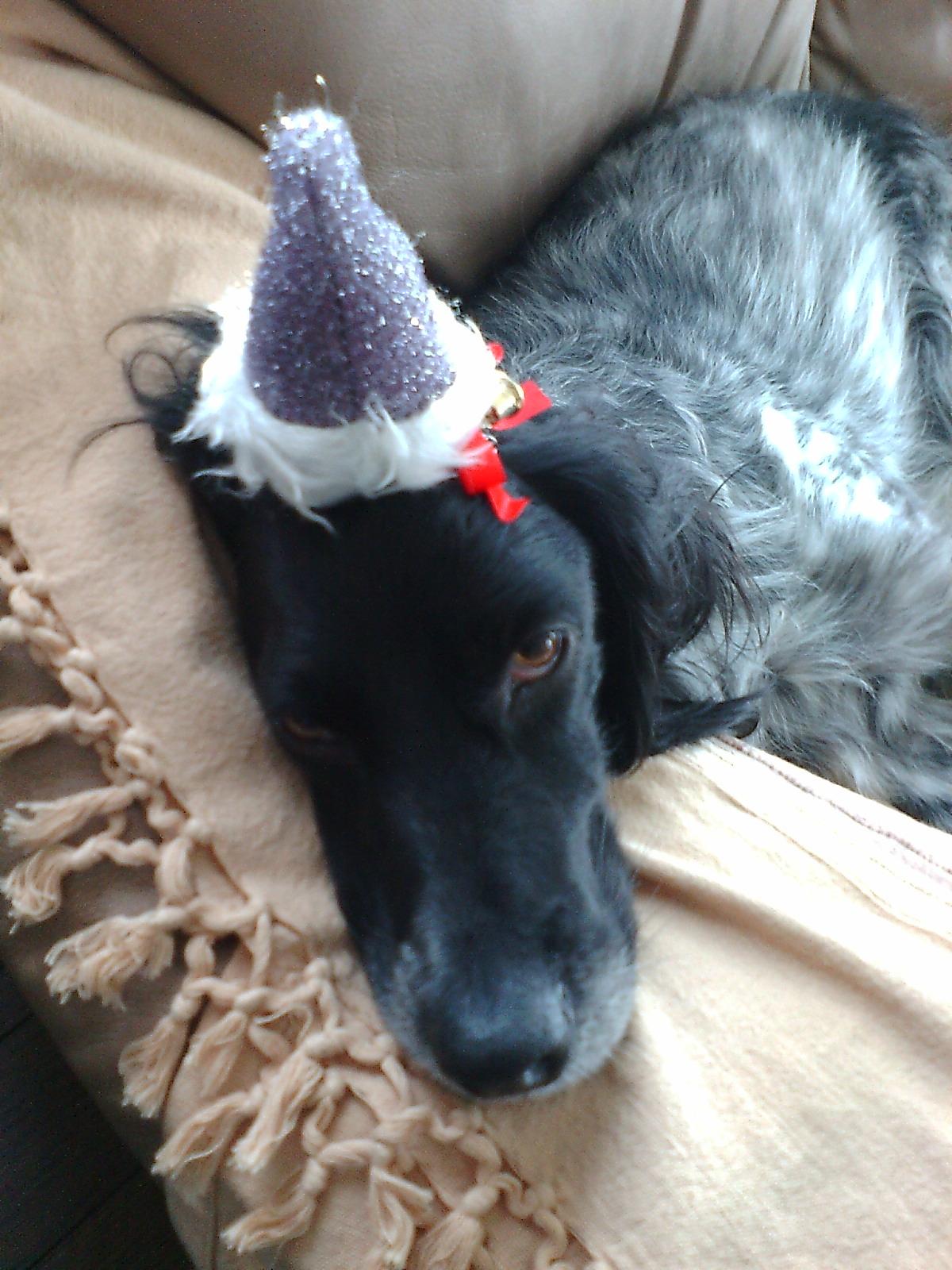 クリスマス2010 2