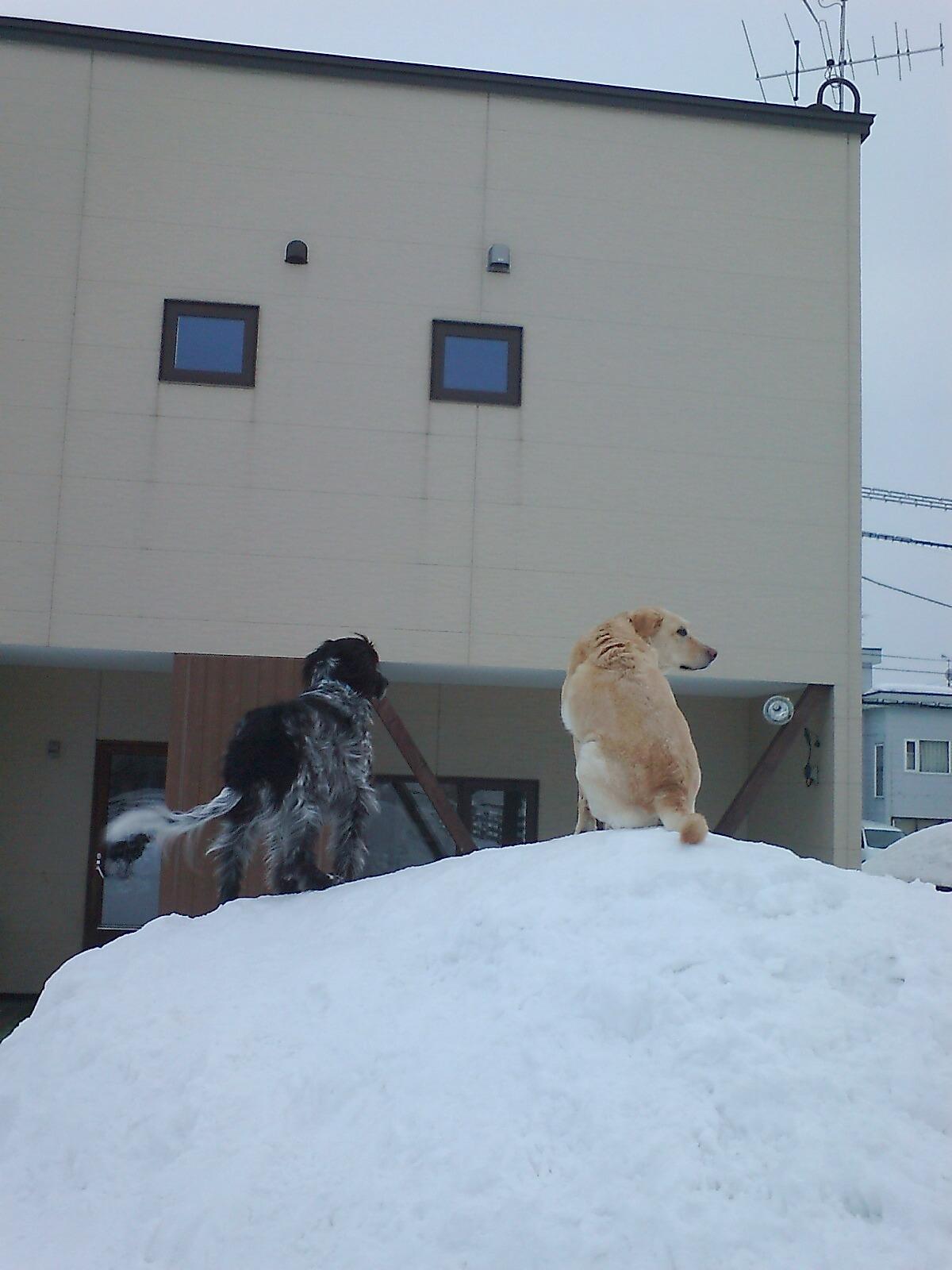 雪のラン3