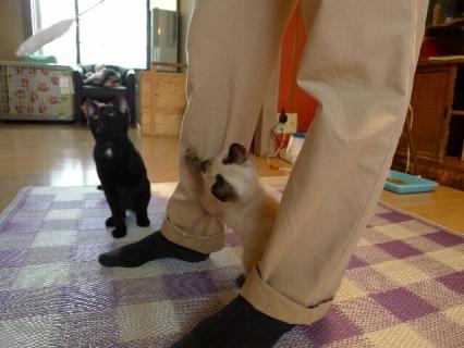 猫じゃらし