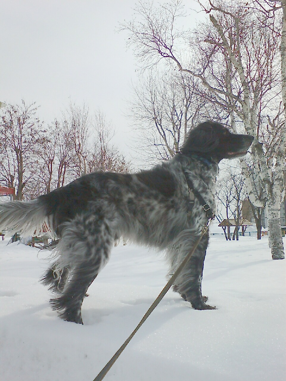 しゃべる犬5