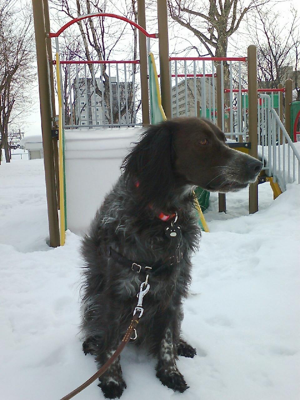 しゃべる犬3