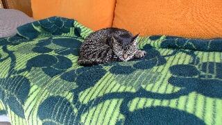 貴族の毛布