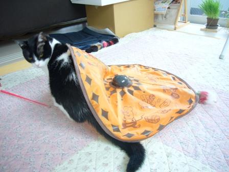 猫 167