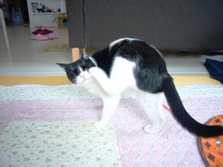 猫 169
