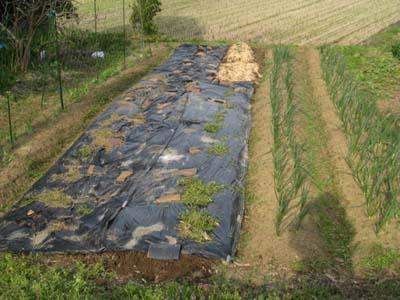 ジャガイモを植える2013 3