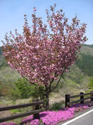 花と渓谷探訪その2 3