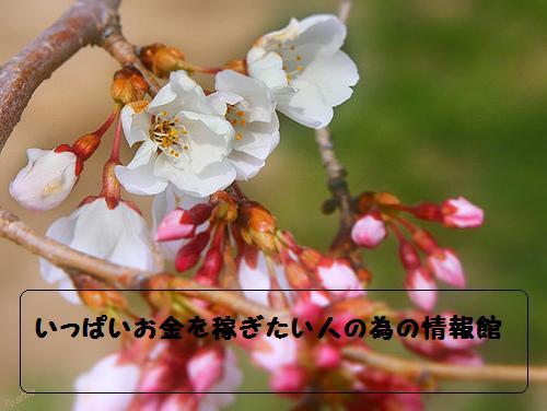 119040912_24d1af1f42_20100403060244.jpg