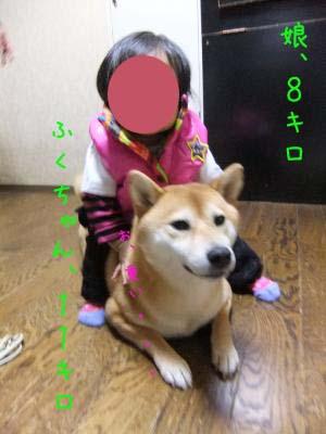 2010_11_13_05のコピー