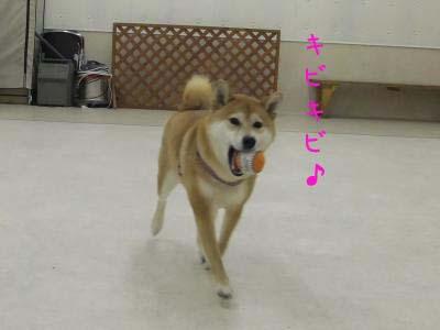 2010_11_28_06のコピー
