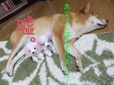 2010_11_28_01のコピー