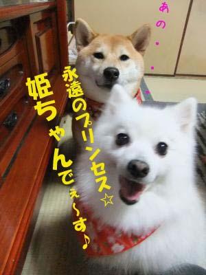 2010_12_09_01のコピー