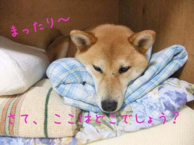 2010_08_10_04.jpg