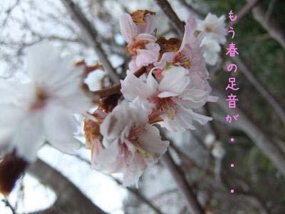 2011_02_03_01のコピー