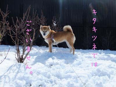 2011_02_03_12のコピー