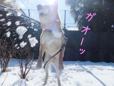 2011_02_03_11のコピー