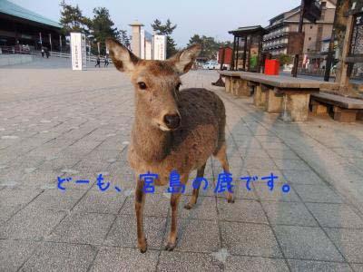 2011_02_10_01のコピー