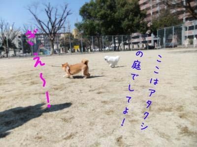2011_02_26_06のコピー