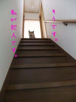 2011_02_26_02のコピー