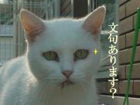 neko121010-6_20130419194556.jpg
