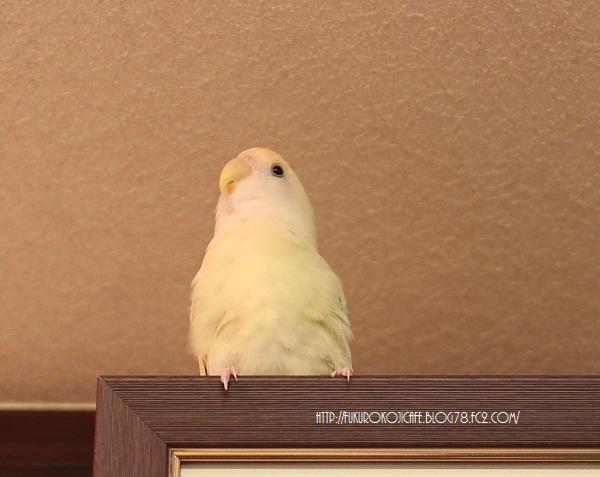 kikiちゃん1