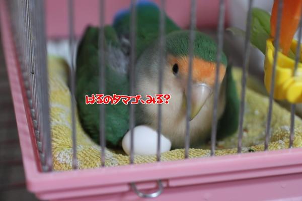 はるタマゴ3