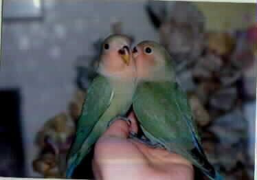 しゅんた&ふうた幼鳥1