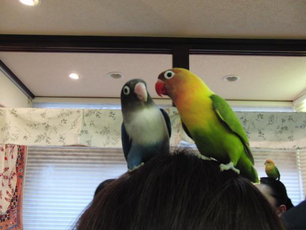 ナナ&ココちゃん
