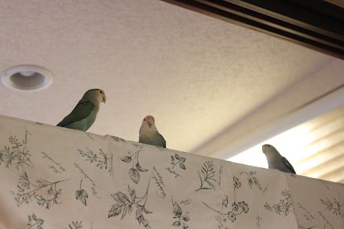 仲良し3羽1